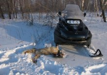 снегоход BRP LYNX YETI SUV V-800